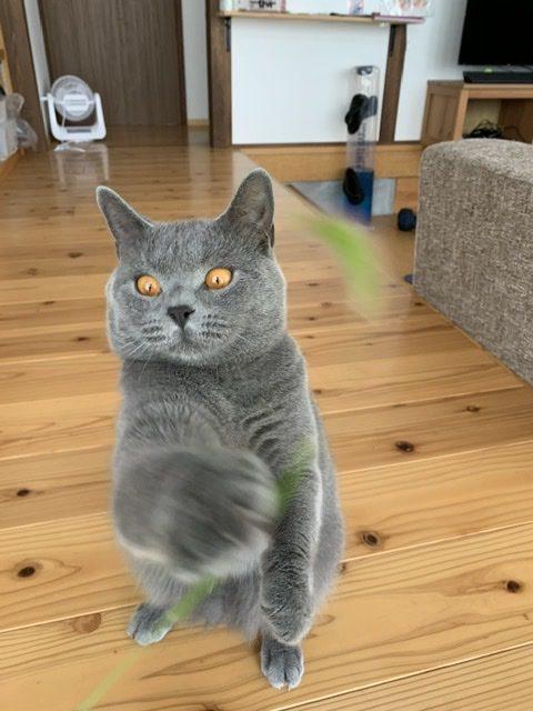 猫じゃらさない